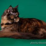 фото Obsidian Furry Totem