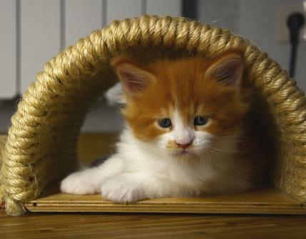 Готовим квартиру к появлению котенка
