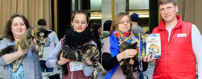 Выставка кошек в Киеве, 3-4 марта 2018 года
